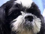 Návštěva u veterináře - Péče o psa