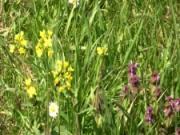 Hubení plevele   - jak hubit plevel v záhradě