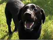 Ako sa cvičia vodiace psy