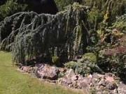 Skalka na slnku - výsadba skalničiek do skalky - aranžovanie skalky