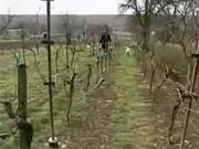 Ako správne zasadiť vinič - sadenie viniča