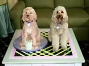 Pes z marcipánu - ako vyrobiť psa ako koláč