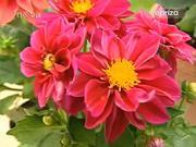 Květiny a různé květinové dekorace v záhradě
