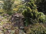 Skalka v polotieni - ako vytvoriť skalku v polotieni a sadiť skalničky