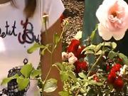 Jak stříhat růže po odkvetení - stříhání růží
