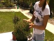 Strihanie ihličnanov - Ako správne skracovať ihličnany