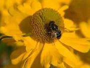 Sadenie kvetov - ako presádzať kvitnúce rastliny