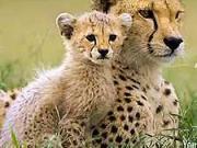 Fotenie divokej zveri - ako fotiť divokú zver  - fotografovanie prírody