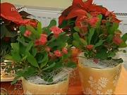 Nápady na vianočné dekorácie