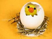 Kuriatko vo vajíčku - Ako vyrobiť kuriatko vo vajičku