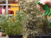 Pěstování bylinek - jako pěstovat bylinky