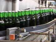 Ako sa robí pivo Budvar priamo v pivovare