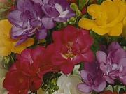 Jarné cibuloviny - ako sadiť okrasné cibuľoviny - narcisy,tulipány,krokusy