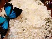 Kvety na svadbu - Ako si vybrať kvetiny na svadbu