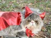 Kočičí maska - jak udělat masku pro kočku
