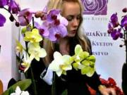 Orchidea - ako pestovať orchideu