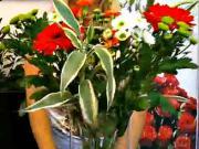 Aranžmá ze živých květin