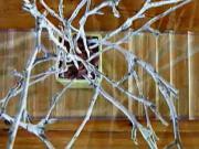 Zimní dekorace: Bílé větve ve váze