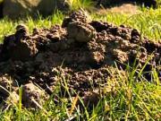 Ako vypudiť krtka zo záhrady