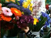 Druhy kvetov