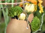 Vázičky z vaječných škrupiniek