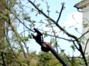 Strihanie ovocných stromov - ako správne strihať ovocné stromy