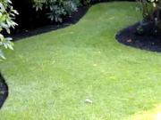 Založenie trávnika - siaty trávnik