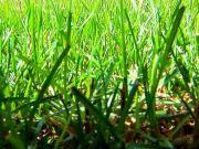Péče o trávník v létě - jak pečovat o trávu během léta
