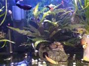 Filtrácia vody v akváriu - Ako zlepšiť filtráciu vody v akváriu