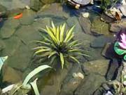 Zahradní jezírko - stavba přírodního jezírka