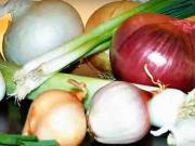 Sadenie cibule - ako sadiť cibuľu -výsadba cibule