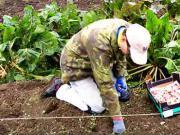 Sadenie cesnaku -  výsadba cesnaku - ako sadiť cesnak