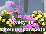 Kvety na parapete - ako naaranžovať kvety na parapete