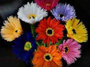 Kvety z papiera - ako vyrobiť papierové kvety