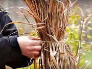 Ako zazimovať okrasné trávy - zazimovanie okrasných tráv