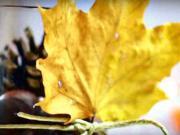 6 jesenných inšpirácii na dekorácie - jesenné dekorácie