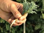 Rozmnožování rostlin řízkováním - jak množit rostliny - řízkování