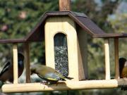 Vtáčie krmitko - krmítko pre vtáky - vtáčia búdka