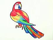 Papagáj - ako sa kresli papagaj