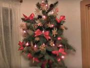 Živý vianočný stromček bez pílenia