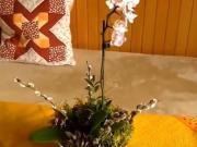 Aranžmá s orchideou