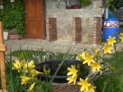 Kuchyňa na záhrade