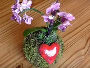 Kvetináč z machu